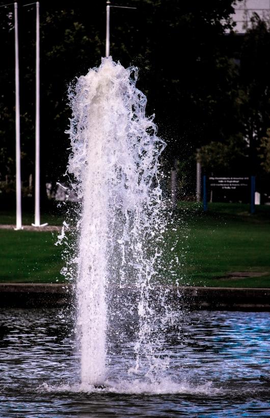 The Lake at UCD