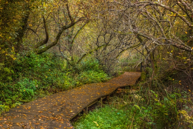 Nature walk in Ferrycarrig National Heritage Park