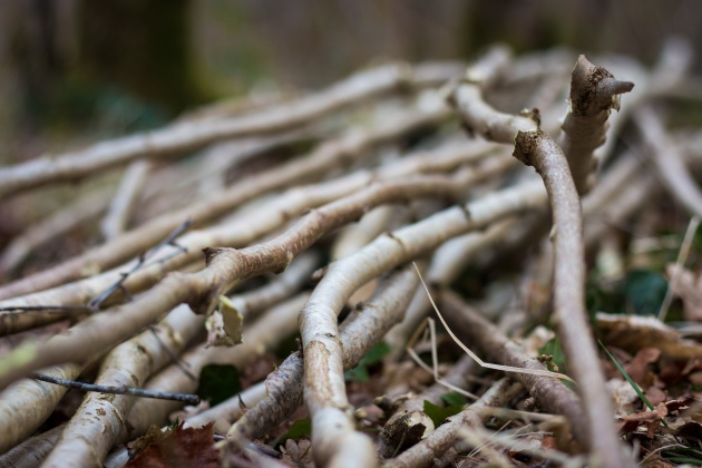 Hazel rods were chosen from a coppiced woodland in Ireland